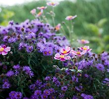 Asters and Japanese Anemones by Katie Kirkland