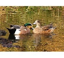 American Wigeon Pair Photographic Print