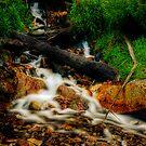 Not Steavensons Falls by Jason Green