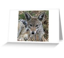 Drenched black backed jackal after rain  Greeting Card