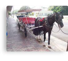 Natchez Carriage Rides - Natchez, Mississippi Canvas Print