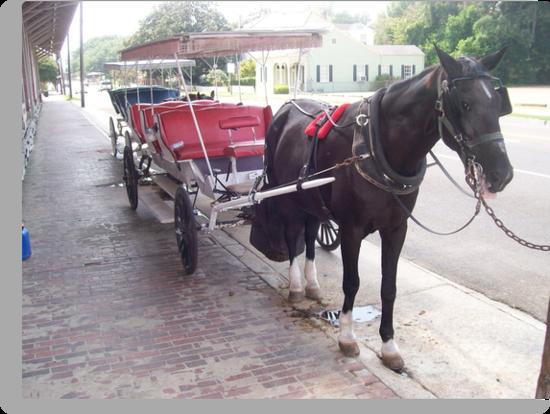 Natchez Carriage Rides - Natchez, Mississippi by Dan McKenzie