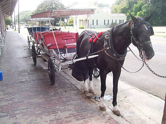 Natchez Carriage Rides - Natchez, Mississippi by Dan McKenzie
