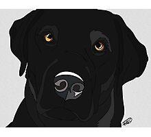 Black Labrador Retriever  Photographic Print
