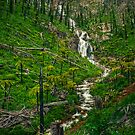 Steavensons Falls #2 by Jason Green