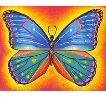 rainbow vibrant butterfly Photographic Print