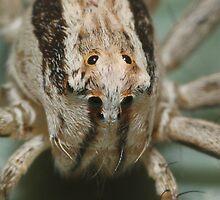 Eye eye eye eye eye eye eye eye by burnettbirder