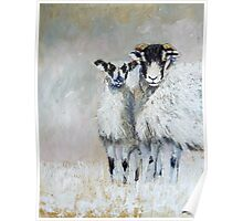 Ewes Looking at Me? Poster