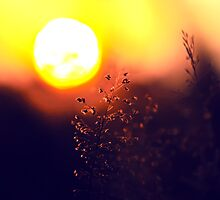 The Beauty Of Weeds #4 by Komang