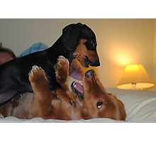 War of the Dachshunds Photographic Print