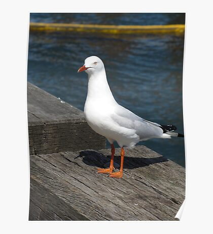 Seagull Striking the Pose Poster