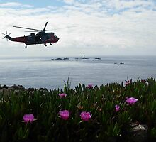 Land's End Action! by Anne Sanders