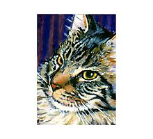 Fearghus: Maine Coon Photographic Print