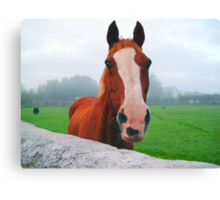 Look of Surprise Canvas Print