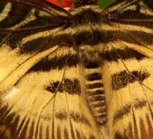 Clipper Butterfly Sticker