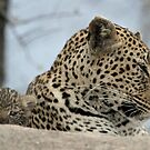 Mother and child 4(I have a very cute baby!) by jozi1