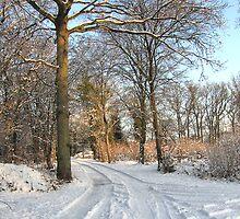 Winter Sunshine by Gill Langridge