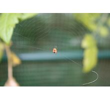 Spider in web Photographic Print