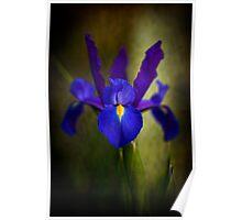 Iris - Geelong Poster