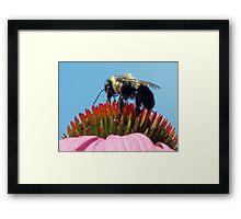 """""""gathering pollen"""" Framed Print"""