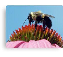 """gathering pollen"" Canvas Print"