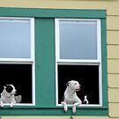 Watching the world go by !! by Ali Brown