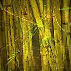The secret in the Bamboo by Marie Luise  Strohmenger