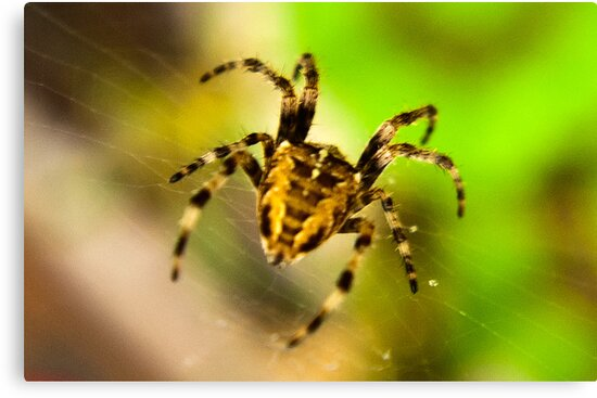 Macro Spider by Trevor Kersley