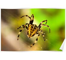 Macro Spider Poster