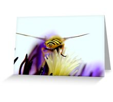 Hoverfly over clematis Greeting Card