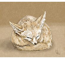 Sleepy fox Photographic Print