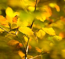 Golden Leaves of Autumn by wildscape