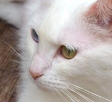 Eyes and whiskers by ♥⊱ B. Randi Bailey