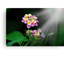THE WONDERS OF NATURE Canvas Print