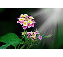 THE WONDERS OF NATURE Photographic Print