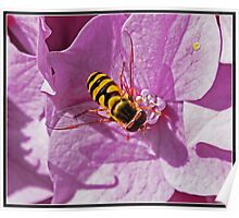 Hoverfly (I) Poster