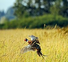 Hunters Delight  <> Pheasants Take Flight by Chuck Gardner
