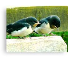Swallows- #1 Canvas Print