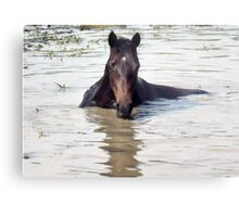 """Horses with Attitude, no.1, 'Come Out Here and Say That'""... prints and products Metal Print"