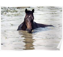 """""""Horses with Attitude, no.1, 'Come Out Here and Say That'""""... prints and products Poster"""