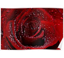 Red Rose in the rain Poster