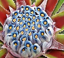 """ Flower of a Aloe Plant"" by Malcolm Chant"