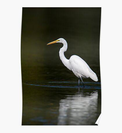 Light Bright White Egret  Poster