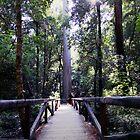 Big Basin Bridge by cherylwelch