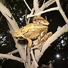 pond frog by brucemlong