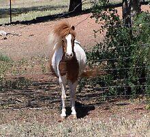 Giddy Up Pony by Debra Hancock