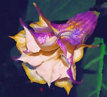 Purple trumpet flower by ♥⊱ B. Randi Bailey