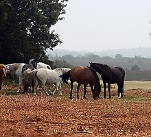 New Forest Ponies of Hampshire England by NaturePrints