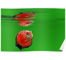 Red Fish in green ocean  Poster