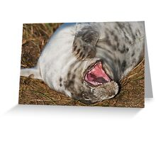 Laughing Grey Seal Greeting Card
